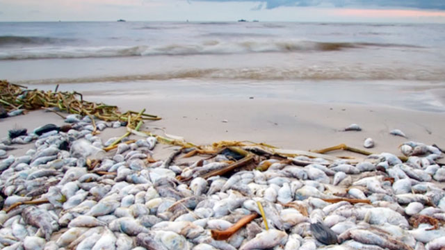 Thảm cảnh cá chết hàng loạt và môi trường biển bị hủy hoại đe dọa sự tồn vong của nhiều triệu ngư dân - Ảnh: netnews.vn