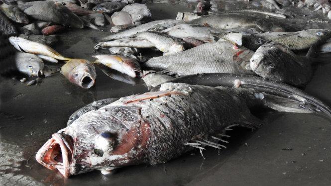 Cá chết hàng loạt ở miền Trung - laodong.com.vn