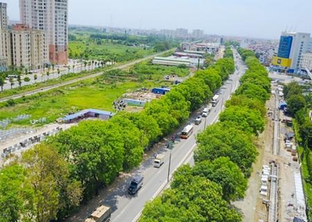 """1.300 cây xanh có nguy cơ bị """"giải tỏa"""" cho dự án mở rộng đường Phạm Văn Đồng, với những lời kết tội khiên cưỡng và lố bịch - Ảnh: plo.vn"""