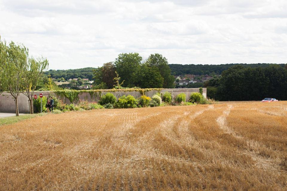 Những cánh đồng lúa mỳ sau mùa gặt