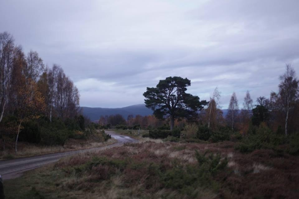 Đường lên Highland