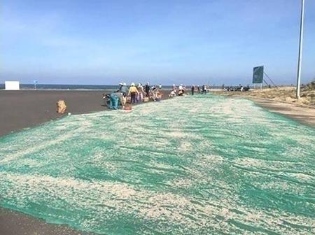 Phơi ruốc trên đường biển
