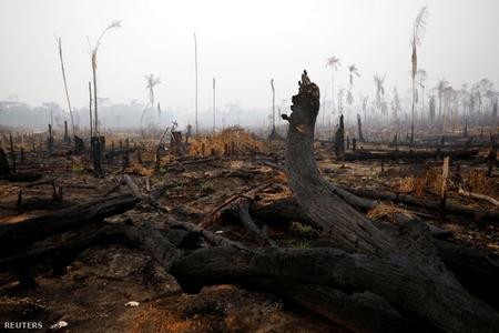 Rừng Amazon cháy rụi ở vùng Boca do Acre, Brazil (ngày 24-8-2019) - Ảnh: Bruno Kelly (Reuters)