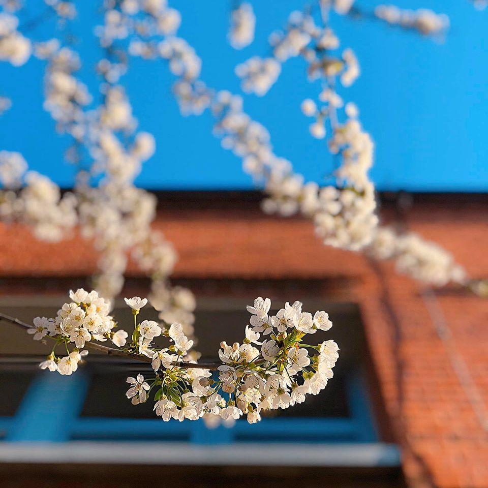 Hoa cạnh quầy khoe sắc dưới nắng mai