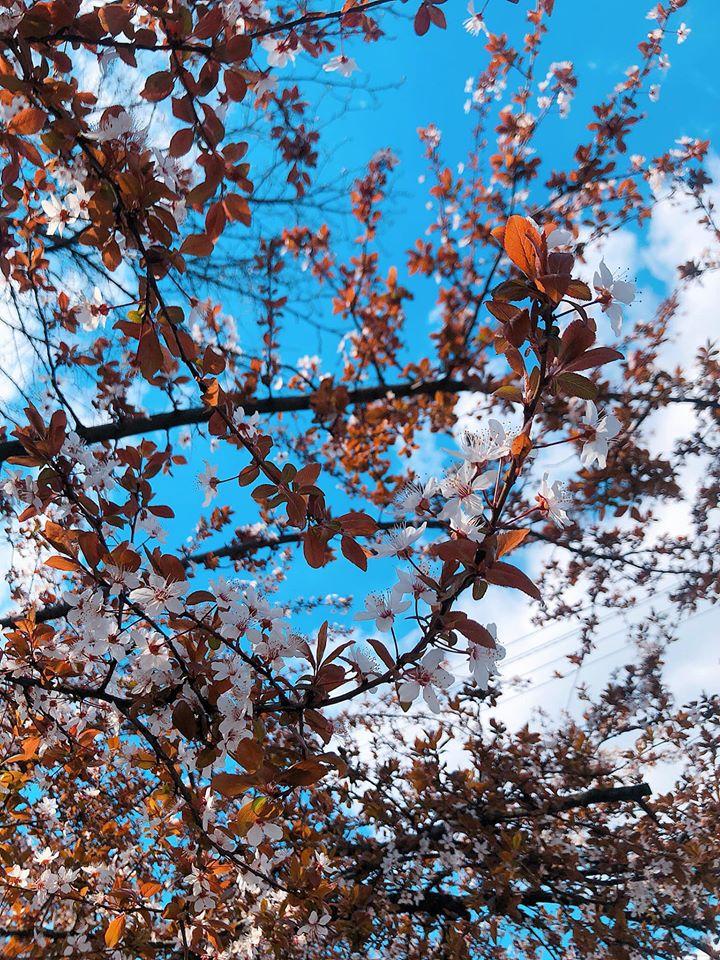 Những cành hoa vươn lên tỏa hương